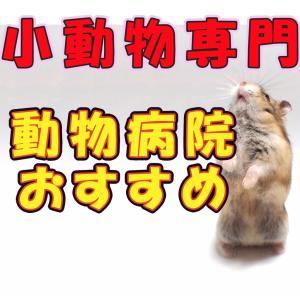 関東の小動物専門の動物病院まとめ