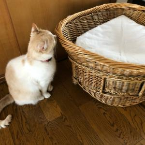 猫様のご機嫌:猫ベッドの場合