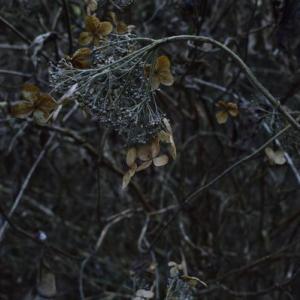 【フォトLOG】高尾の森で眠る冬の花を撮る