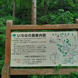 高尾山、花劇場はじまる(2021年5月)