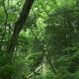 【フォトLOG】緑色の道・高尾山