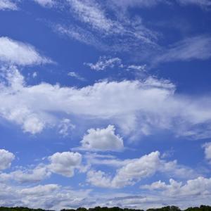 【フォトLOG】青空を撮ったら心まで晴れ晴れした。(昭和記念公園・東京)