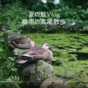 【フォトLOG】梅雨の高尾散歩。(動画を撮ってみた。)