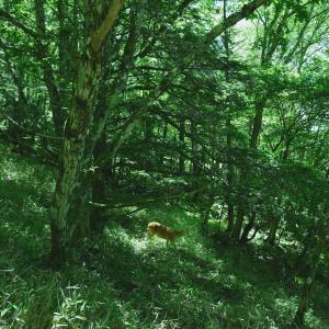 光の森を歩いた大菩薩嶺(2021年07月)