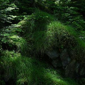 【フォトLOG】大菩薩嶺・こめつがの森で見得を切る