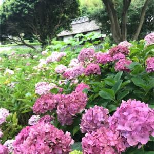 大鐘家 (静岡県牧之原市) -重文の庄屋屋敷のあじさい祭