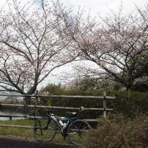 さぬき空港公園へ お花見~♪
