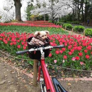 シラス13年目へ、自転車ブログも長いこと付き合いありがとう!