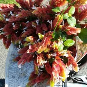 今週の花と、今週の常備菜