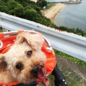 暑いけど、まろたん(といぷー)と大串半島へ。