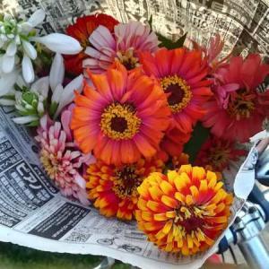 今週の花と、常備菜の追加