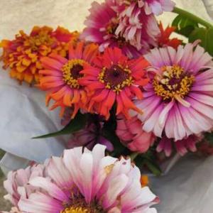 今週の花と、常備菜追加