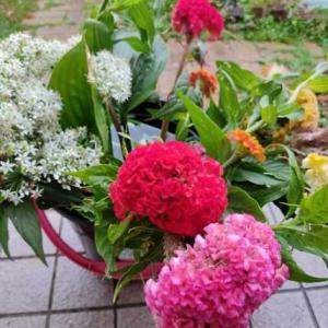 今週の花と、常備菜
