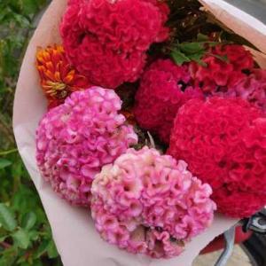 今週の花と、明日は金曜日~♪