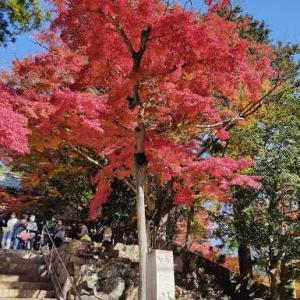大窪寺の紅葉、見ごろ!