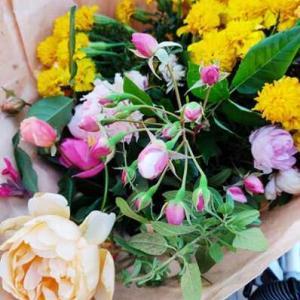 今週の花とか、いろいろ