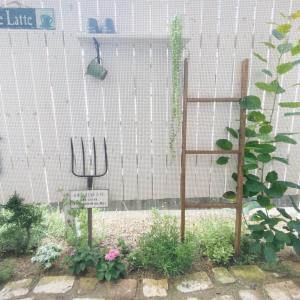 最近のお庭の様子
