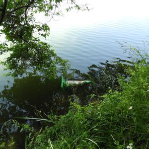 上野沼の残念な光景