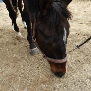 民家で「馬」を飼う移住者の先輩は、地域の人々に愛されていた☆