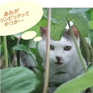 猫達も見た?開会式
