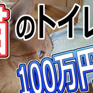 猫のトイレ ひとつ100万円!? 猫初心者に贈る飼育のヒント
