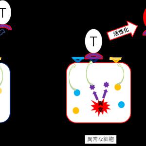 高校生物+α:免疫を担う細胞の細胞膜タンパク質