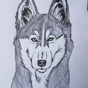 ハスキー犬を描いてみた