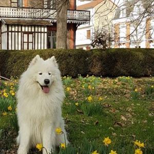 川沿い公園とキースホンド犬