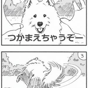 Wolfy絵日記「終わらないウォルフィーの遊び」