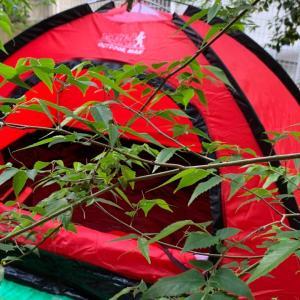 安くて便利なおすすめキャンプ テント、 庭キャンを設営してみた