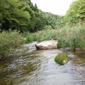 河原が無い時の魚撮影