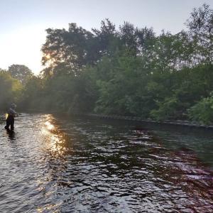 朝活でアメマス釣り