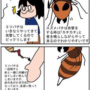 ミツバチは意外と危ない⁉①ミツバチについて簡単な説明