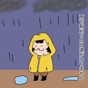 雨で稲刈りの目途が立たない・・・