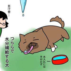 独特な水の飲み方をする怠け者な犬