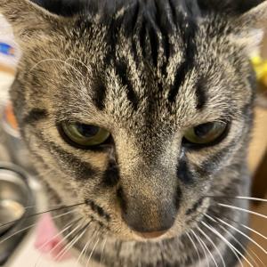 【猫家族】猫の鼻乾燥と大人の蜜いちご。