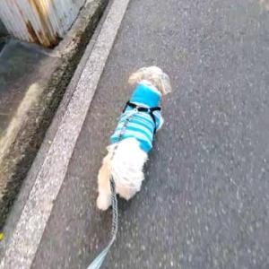 暖かい日の散歩はウキウキと足取りも軽く