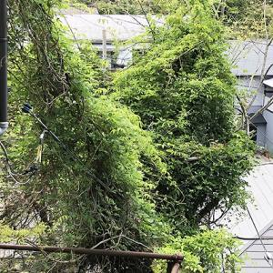 電線にかかった枝の伐採