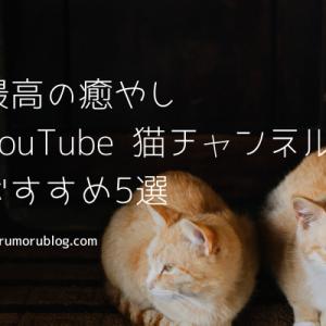 【最高の癒やし】YouTubeの猫チャンネル おすすめ5選