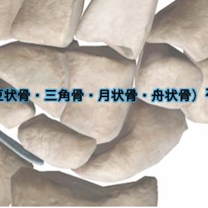 手根骨(豆状骨・三角骨・月状骨・舟状骨)を理解する