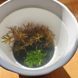 植木鉢でメダカを飼い始めました~♪新しいコトを始めるときに気を付けていること