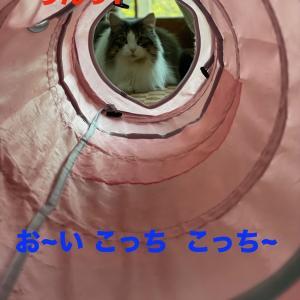 見事にトンネルを 駆け抜け…