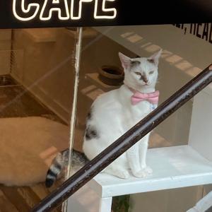 キャットカフェが … ヤバイ‼️