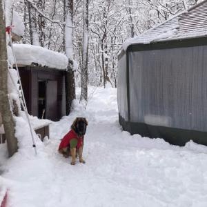 犬小屋の屋根雪下ろし