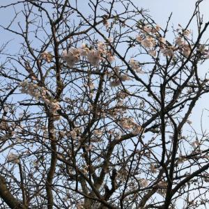 備蓄に癒される春