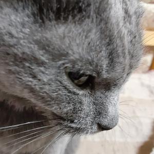 猫の季節の変わりめには、注意