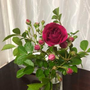 庭の片隅にミニ薔薇とお弁当売りがきた!