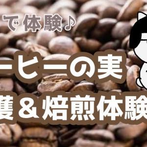 1杯のコーヒーが出来るまで 沖縄県名護市の「中山コーヒー園」でコーヒーの収穫体験&「cafe gyutto」で焙煎体験