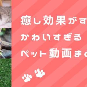 癒やされるアニマル動画|フリーランス猫が独断と偏見で選んだ、かわいすぎる動物たち