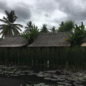 ラオスの旅 ホテルダラブアの水辺のお庭を散策